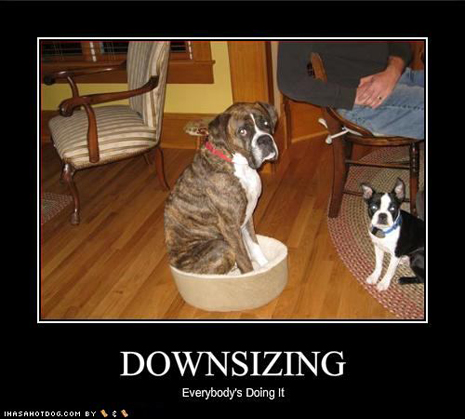 funny-dog-pictures-your-dog-is-also-downsizingjpg
